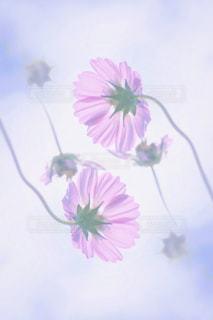 花の写真・画像素材[265729]