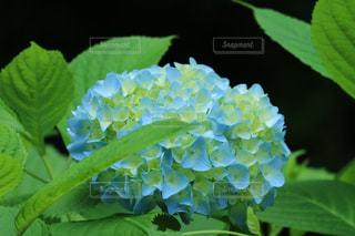 花の写真・画像素材[551367]