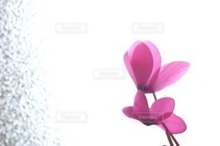 近くの花のアップの写真・画像素材[1026396]