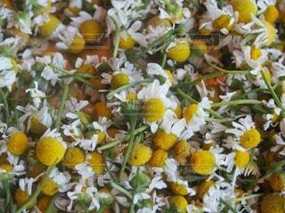 花の写真・画像素材[62784]