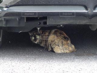 車の下に隠れる野良猫の写真・画像素材[1860177]