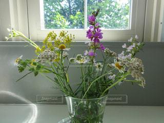 ハーブの花の写真・画像素材[1876874]