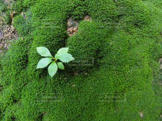 苔の写真・画像素材[1928602]