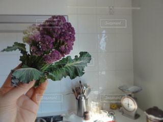 キッチンでカリフラワーを掲げて。の写真・画像素材[1929285]