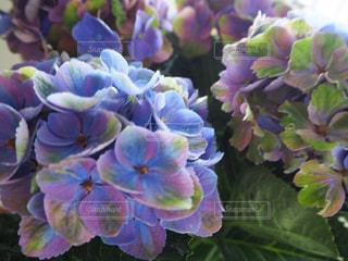 魅惑的な花の写真・画像素材[2158843]