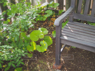 庭の片隅にの写真・画像素材[2169574]