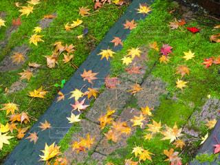 野原の色とりどりの花の群しの写真・画像素材[2407235]