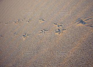 浜辺を飛ぶ鳥の写真・画像素材[2461266]