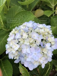 花のクローズアップの写真・画像素材[2224988]