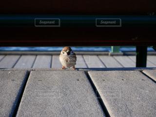 歩道の上に座っている鳥 - No.1265942