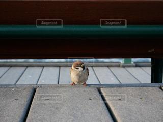 ベンチに座っている小さな白い鳥 - No.1265943