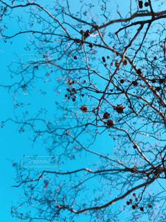 木の枝に気になる実の写真・画像素材[1877524]