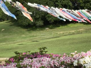 フィールドに凧の飛行の人々 のグループの写真・画像素材[1156443]