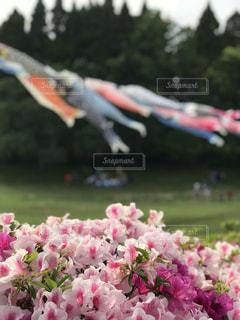 緑の葉とピンクの花の写真・画像素材[1156445]