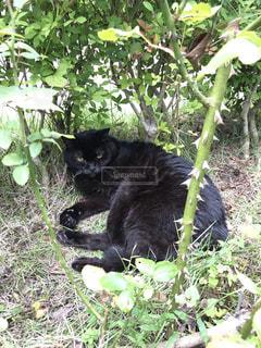田舎の猫の写真・画像素材[1828336]