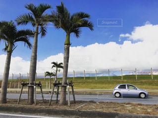 沖縄の道路、南国の木と米軍基地のフェンスの写真・画像素材[1827659]
