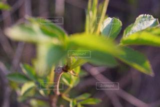 緑の植物のアップの写真・画像素材[1927534]