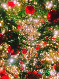 クリスマスツリーの写真・画像素材[1830473]