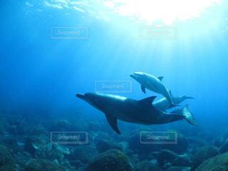 自由に泳ぐイルカの写真・画像素材[1830629]