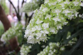 花のヨリ写真の写真・画像素材[1831253]