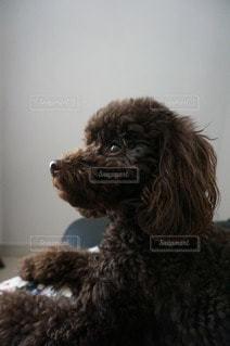犬の写真・画像素材[63982]