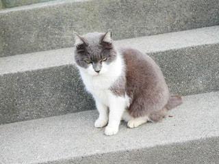 建物の上に座っている灰色と白猫の写真・画像素材[1831137]
