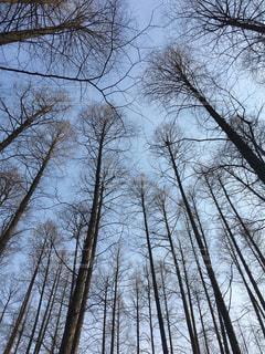 空に向かって伸びる木々の写真・画像素材[1880787]