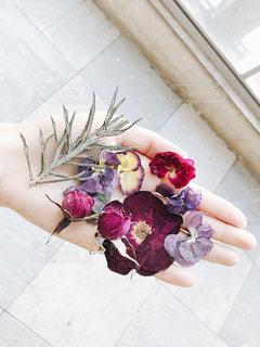 紫色の花の写真・画像素材[1832776]