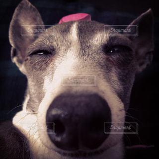 犬と薔薇の写真・画像素材[1988716]
