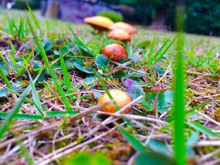 庭園にある5連キノコ。の写真・画像素材[1834204]