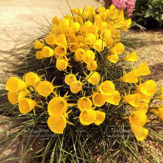 黄色い花の写真・画像素材[1877301]