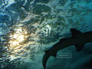 新潟市水族館マリンピア日本海の写真・画像素材[1855299]