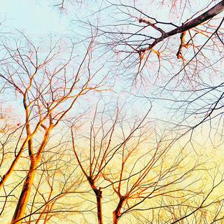 生命力あふれる木々の写真・画像素材[1834784]