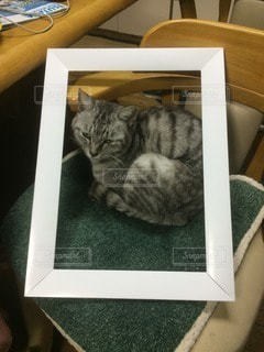 猫の写真・画像素材[63281]