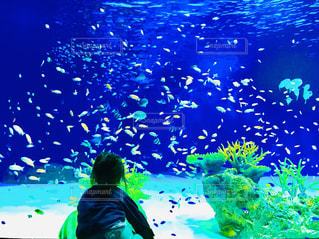 魚を眺める子どもの写真・画像素材[1836559]