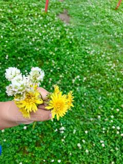 草の中の黄色い花の写真・画像素材[2286724]