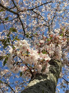 春爛漫の写真・画像素材[1969263]
