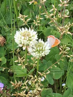 蝶と花の写真・画像素材[2030375]