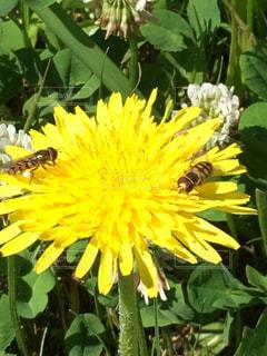 蜂が夢中の写真・画像素材[2112221]