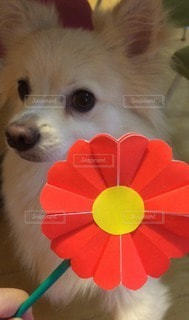犬の写真・画像素材[83654]