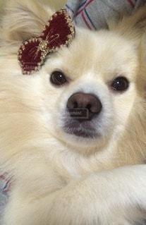 犬の写真・画像素材[83656]