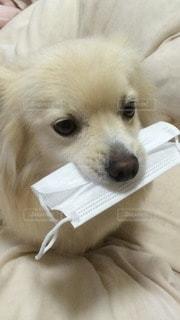 犬の写真・画像素材[83657]