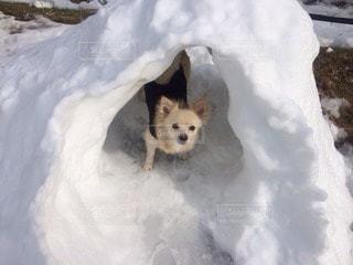 犬の写真・画像素材[83689]