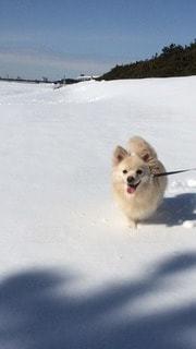 犬の写真・画像素材[83694]