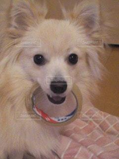 犬の写真・画像素材[83700]