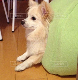 犬の写真・画像素材[83703]