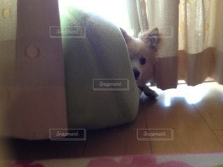 犬の写真・画像素材[83704]