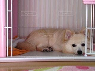 犬の写真・画像素材[83713]