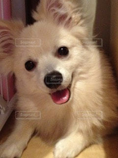 犬の写真・画像素材[83719]