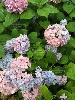 自然の写真・画像素材[70464]